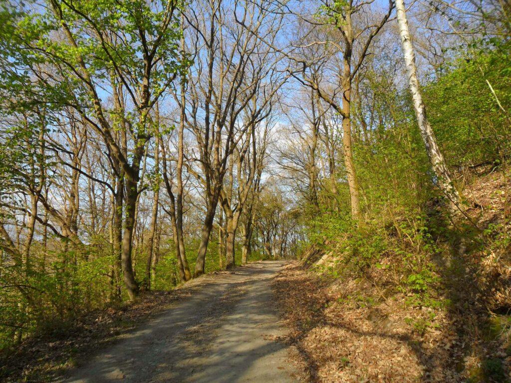 Andeler Wald Wanderweg